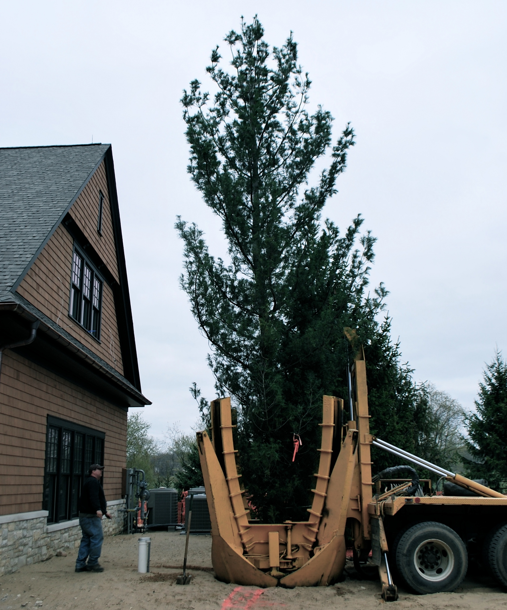 Transplanting Mature Trees in Petoskey Japanese White Pine