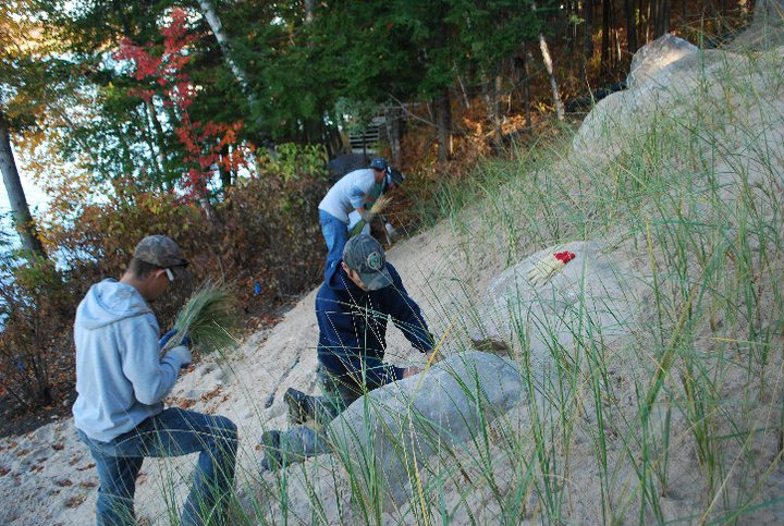 Dune Grass Planting in Petoskey Vidosh North